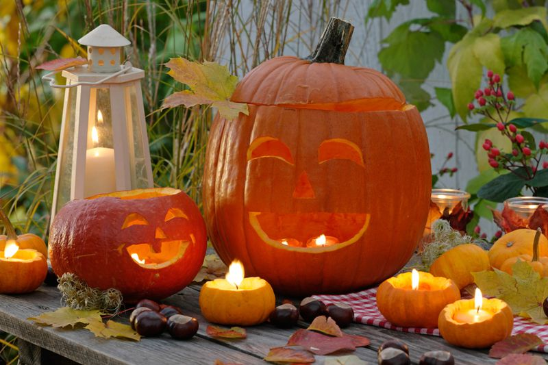 A candle lit pumpkin display with two jack-o-lanterns and small hollowed out pumpkins with tea lights.